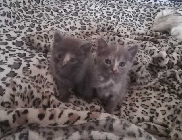 Отдам даром Кошечка или котик