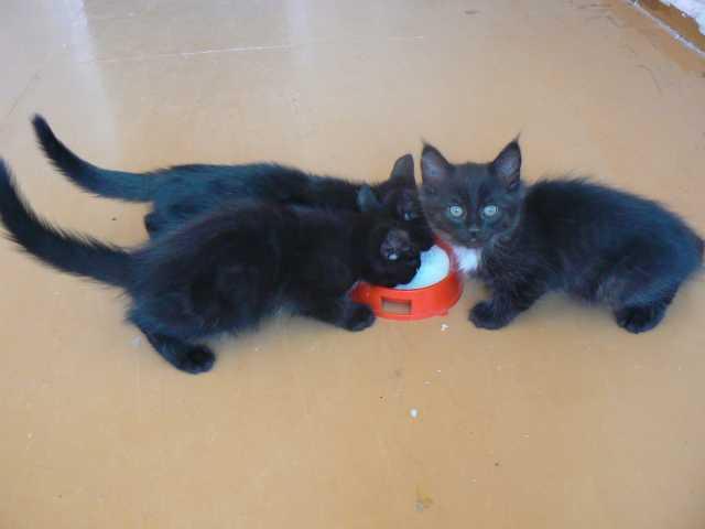 Отдам даром бугурусланских котят