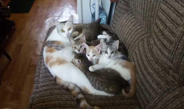 Отдам даром: Котята в добрые руки
