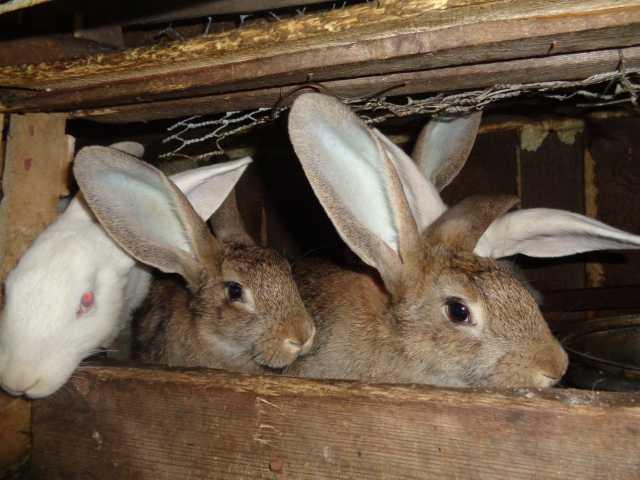 Продам продаю кроликов