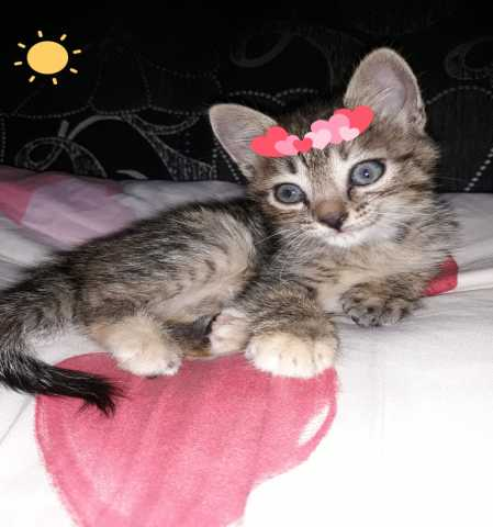 Отдам даром: котенок в дар
