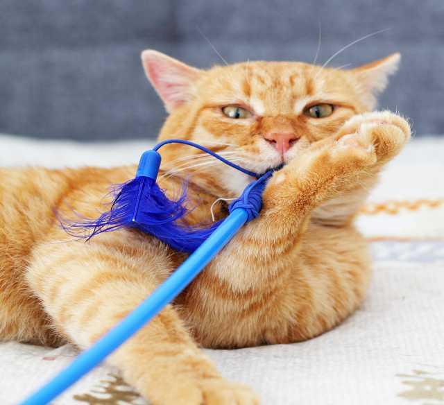 Отдам даром Рыжий кот Миндаль, 1,5 года. Крутяцкий!