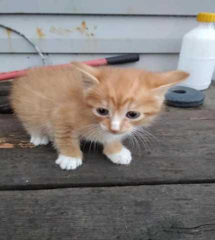 Отдам даром: котята ищут тебя!