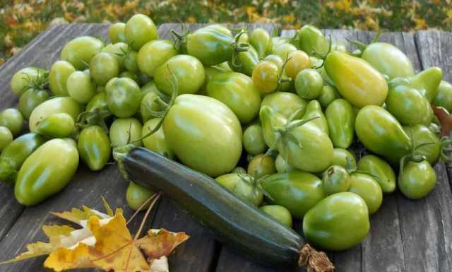 Куплю Куплю дачные зеленые помидоры