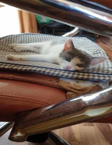 Отдам даром Милейший котенок Филиппок в добрые руки