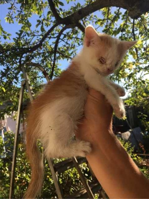 Отдам даром: Особенный слепой котенок ищет дом