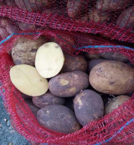 Продам Картофель сорт Гала калибр 5+ крупный и