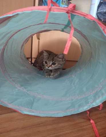 Отдам даром Отдам котёнка в дар