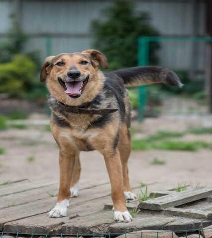 Отдам даром Добрая и общительная молодая собака-прин