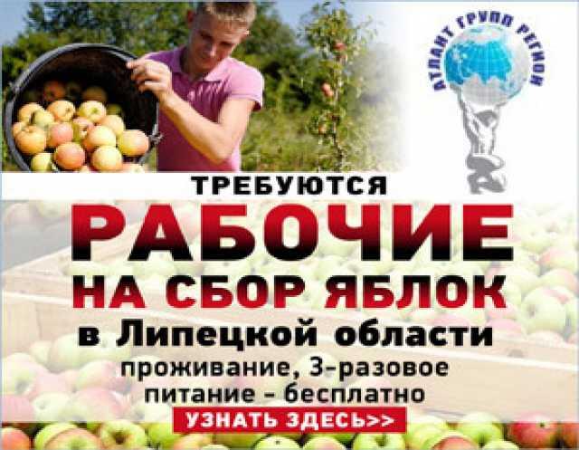 Требуется: Сборщик урожая яблок
