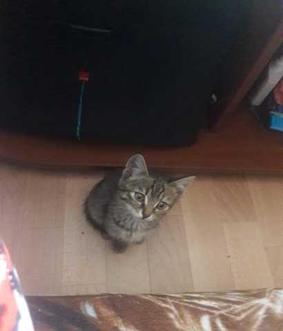 Отдам даром: котята-мальчики