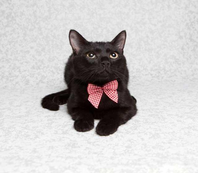 Отдам даром Кот в добрые руки
