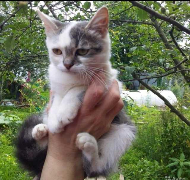 Отдам даром Два очаровательных котёнка в добрые руки