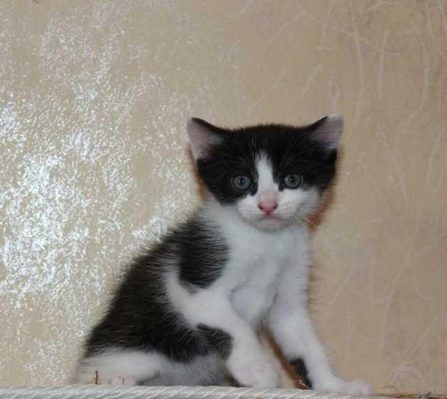 Продам: Котята 1-2 месяца