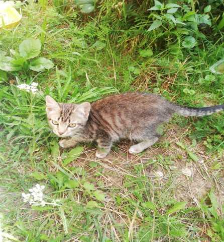 Отдам даром котенок срочно ищет дом