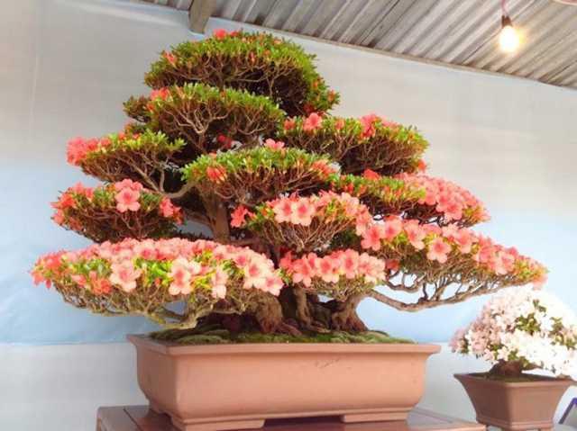 Куплю: Выкуп скупка покупка комнатных растений