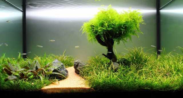Куплю: Выкуп скупка покупка аквариумов