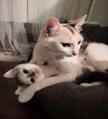 Отдам даром Кошка с котенком