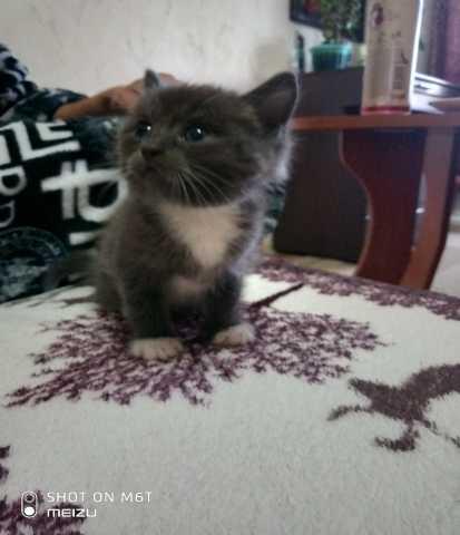 Отдам даром котят, возраст месяц, в хорошие руки