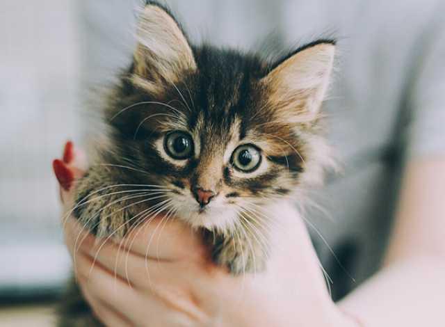 Отдам даром Очень красивые пушистые котятки в дар