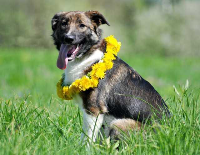 Отдам даром Диночка – собака-радость, собака-мечта!