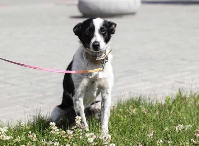 Отдам даром Веснушка - игривая и ласковая собачка
