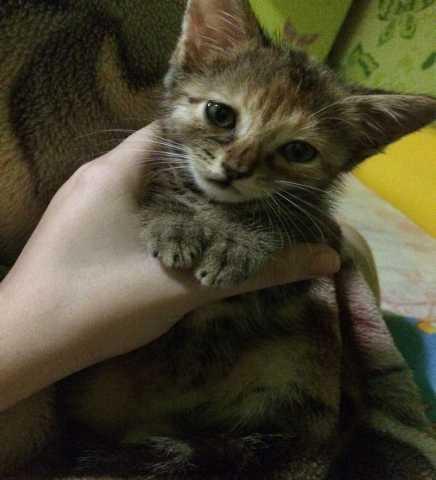 Отдам даром Котёнок