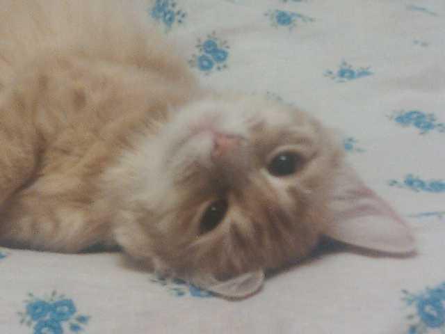 Отдам даром: Кошка на дачу