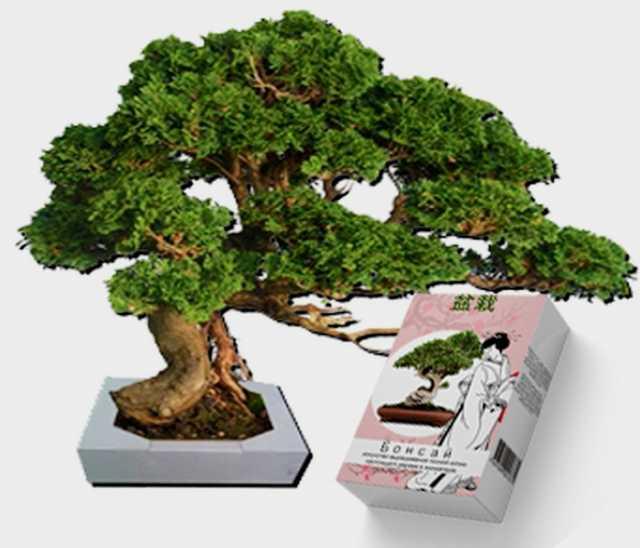 Продам Карликовые мини-деревья Бонсай