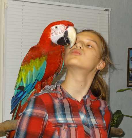 Продам Молодых крупных попугаев