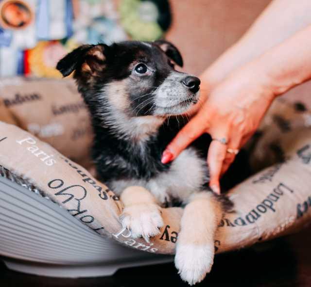 Отдам даром Чудесные щенки ищут дом