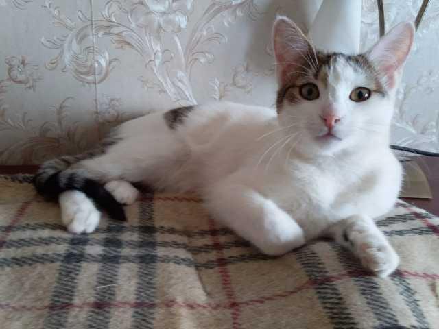 Отдам даром Бельчик, котенок ищет дом