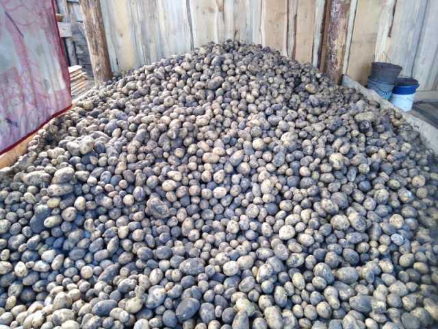 Продам Картофель домашний