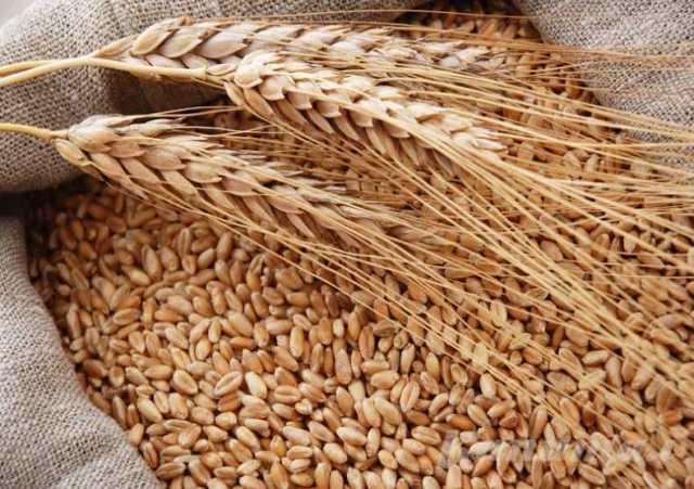 Продам: Фураж, корма для животных, семена