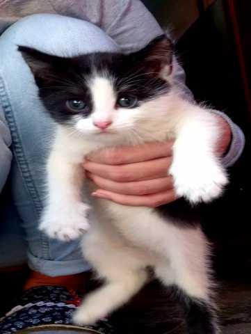 Отдам даром: Кошечка