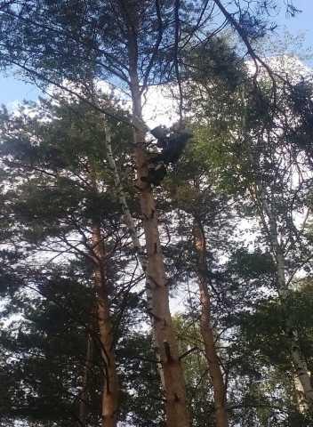 Предложение: Удаление аварийных деревьев