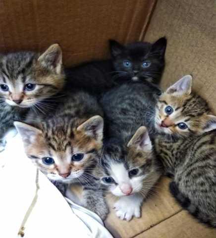Отдам даром 89161647647 котята в дар