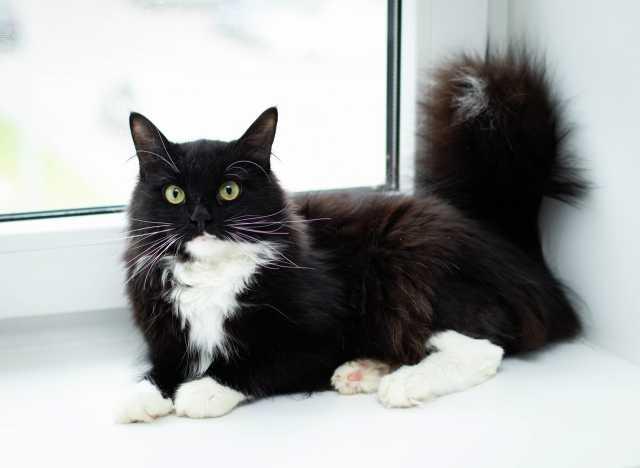Отдам даром Красавый котик Борис