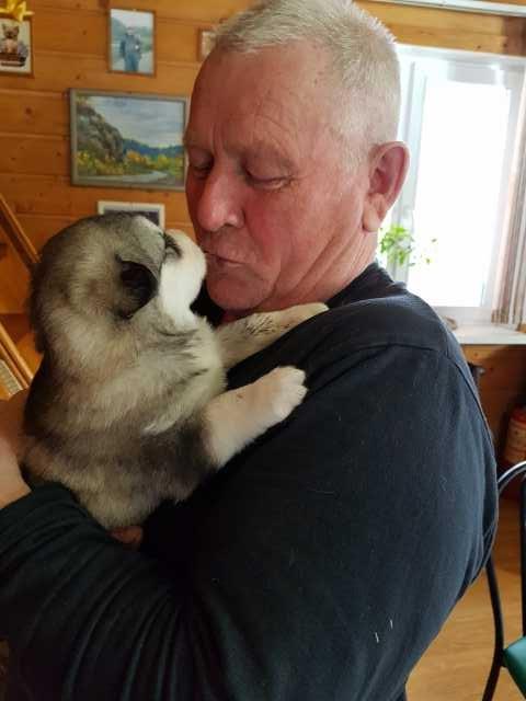 Продам Щенки Аляскинского Маламута