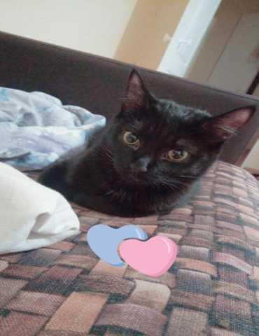 Отдам даром: Черная кошка