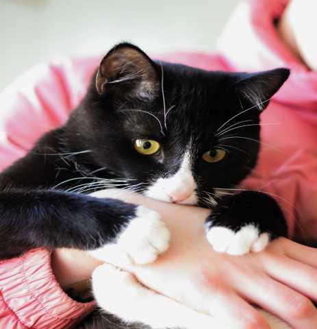 Отдам даром Уютный, обнимательный котик