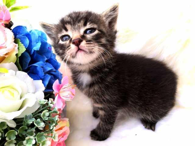 Отдам даром Котята!!!!!!!!