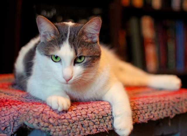 Продам Молодой кот Каспер - в добрые руки