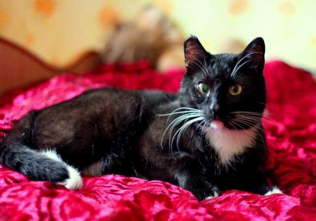Продам Молодой кот Паша