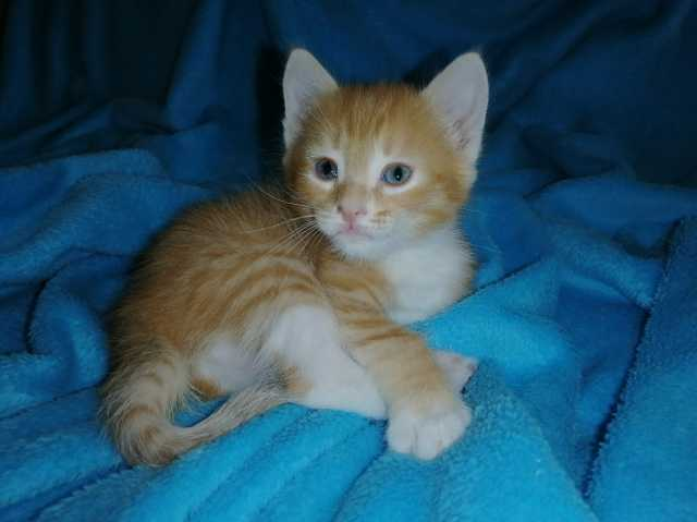 Отдам даром: Котятки
