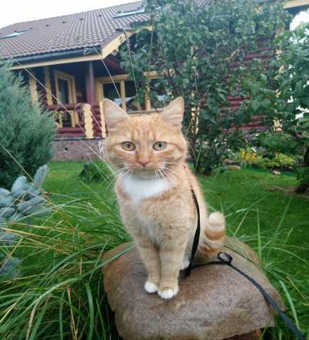 Отдам даром Ласковая кошечка Муся ждёт хозяина!
