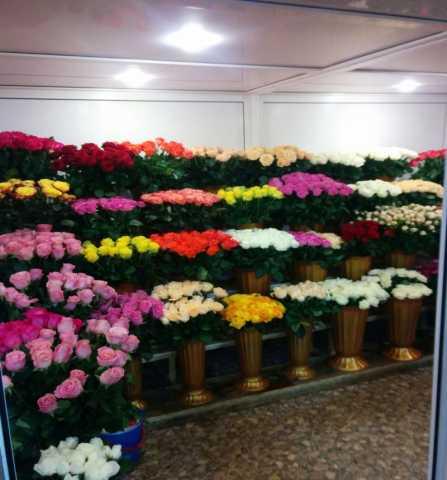 Продам Цветы в розницу и оптом Краснодар!