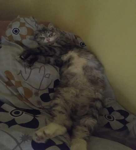 Отдам даром: Кошка ищет дом