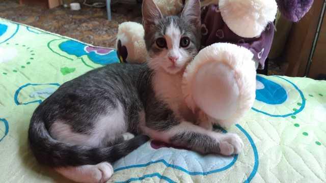 Отдам даром: Котёнок серого окраса с карими глазами