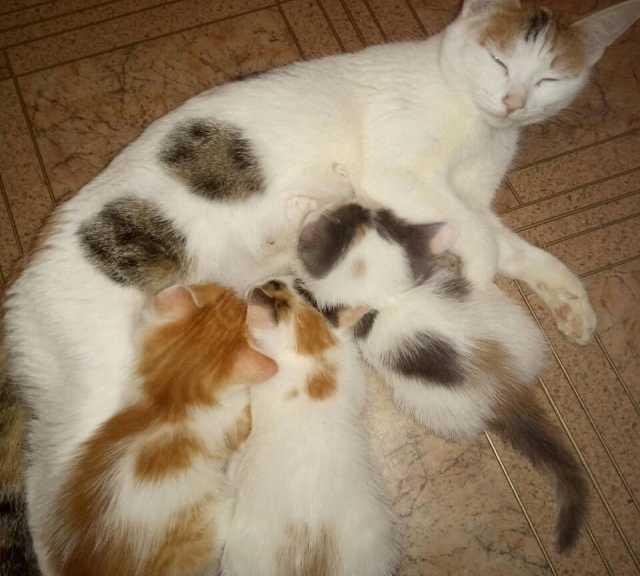 Отдам даром: Милых котят